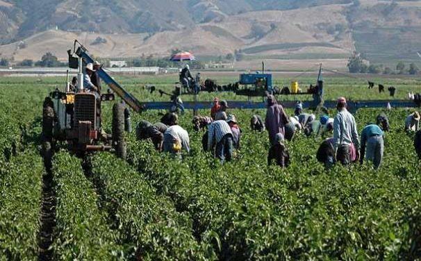 Los jornaleros agrícolas de San Quintín, entre la vulnerabilidad y los abusos