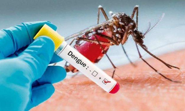 Dengue, virus que ataca a una sola clase
